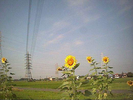 150808e-mini_05.jpg