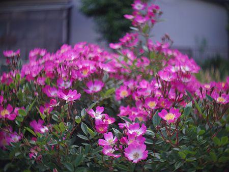 170527Q10_KINO-SANKYOU_90.jpg